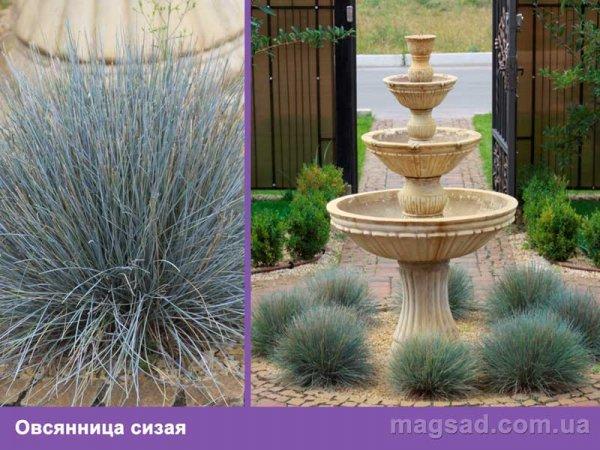Растения для ландшафтного дизайна каталог с